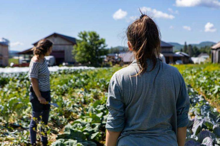VUOI LAVORARE NEL SETTORE AGRICOLO IN LOMBARDIA?